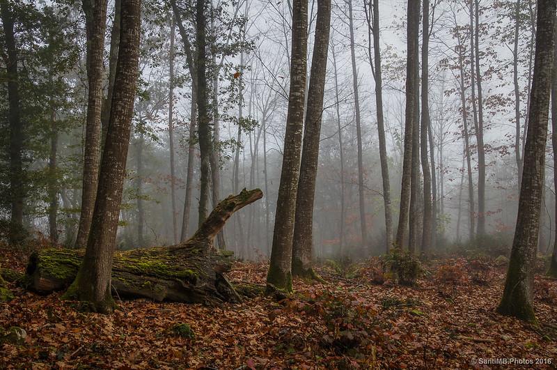 La niebla invade el bosque