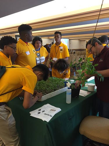 A USDA scientist teaching MANRRS students about tomato grafting