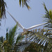 Coconuts and wind turbines