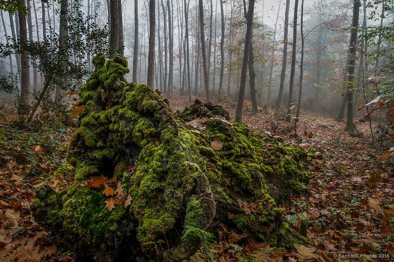 Un tronco podrido