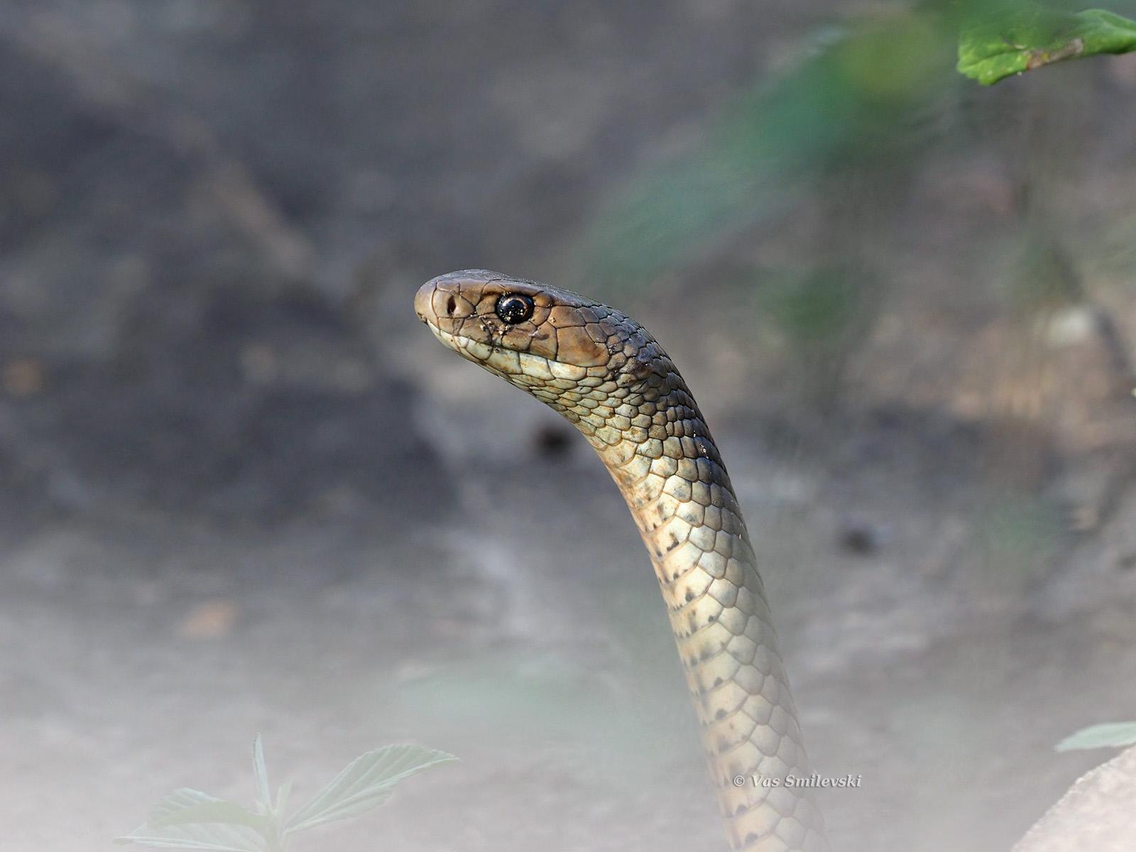 snakes birds in backyards