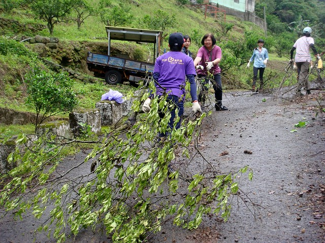 第二天果園環境整理,志工們合力搬運之前修剪下的枝條。