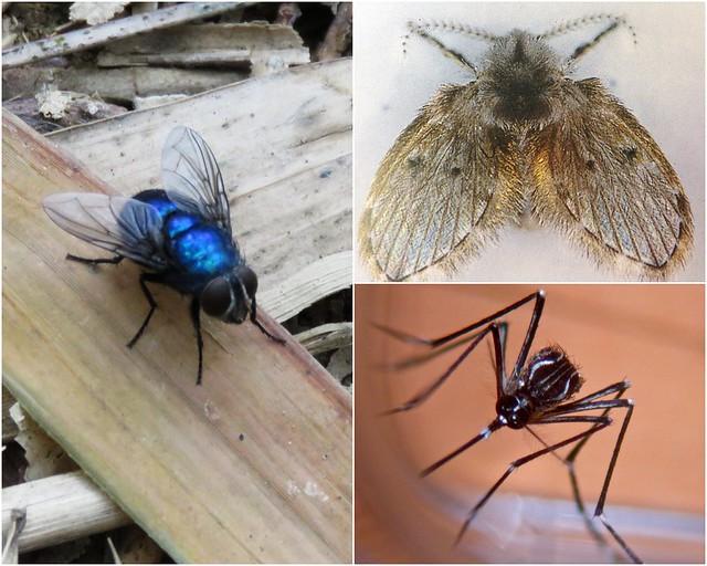 蒼蠅、蚊子、蛾蚋這幾種昆蟲少打交道為妙。