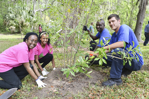 Students and staff from the University of Florida working together to plant trees