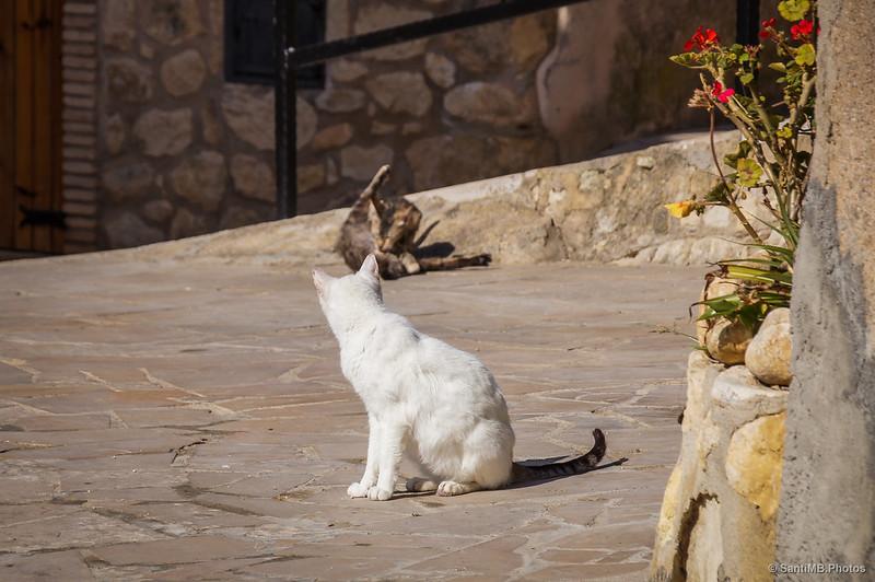 Gatos de Castellet