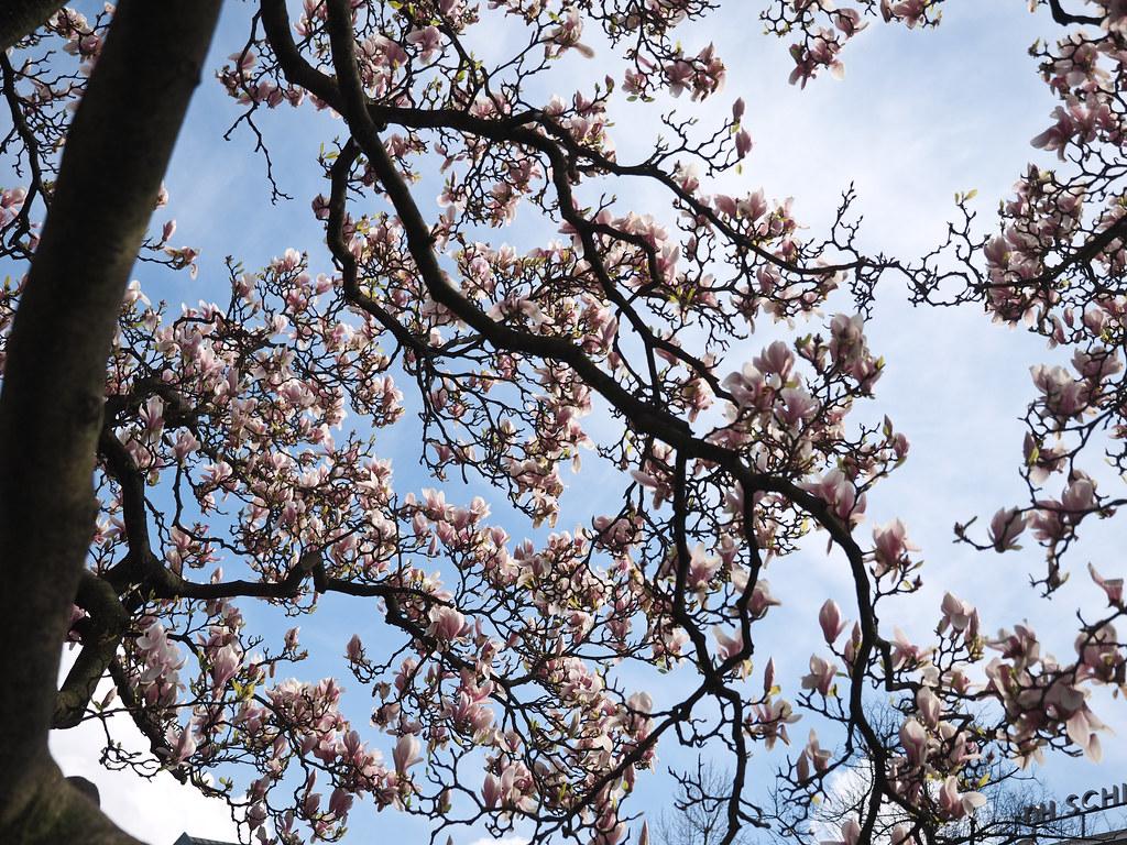 Spring at Den Bosch