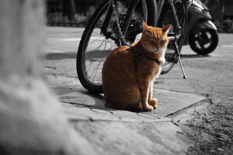 喵星人 Cat|OLYMPUS E-M5 MKII MK2