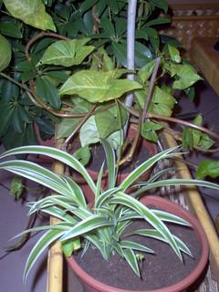 foto 14 pianta sulla quale è nato il bruco