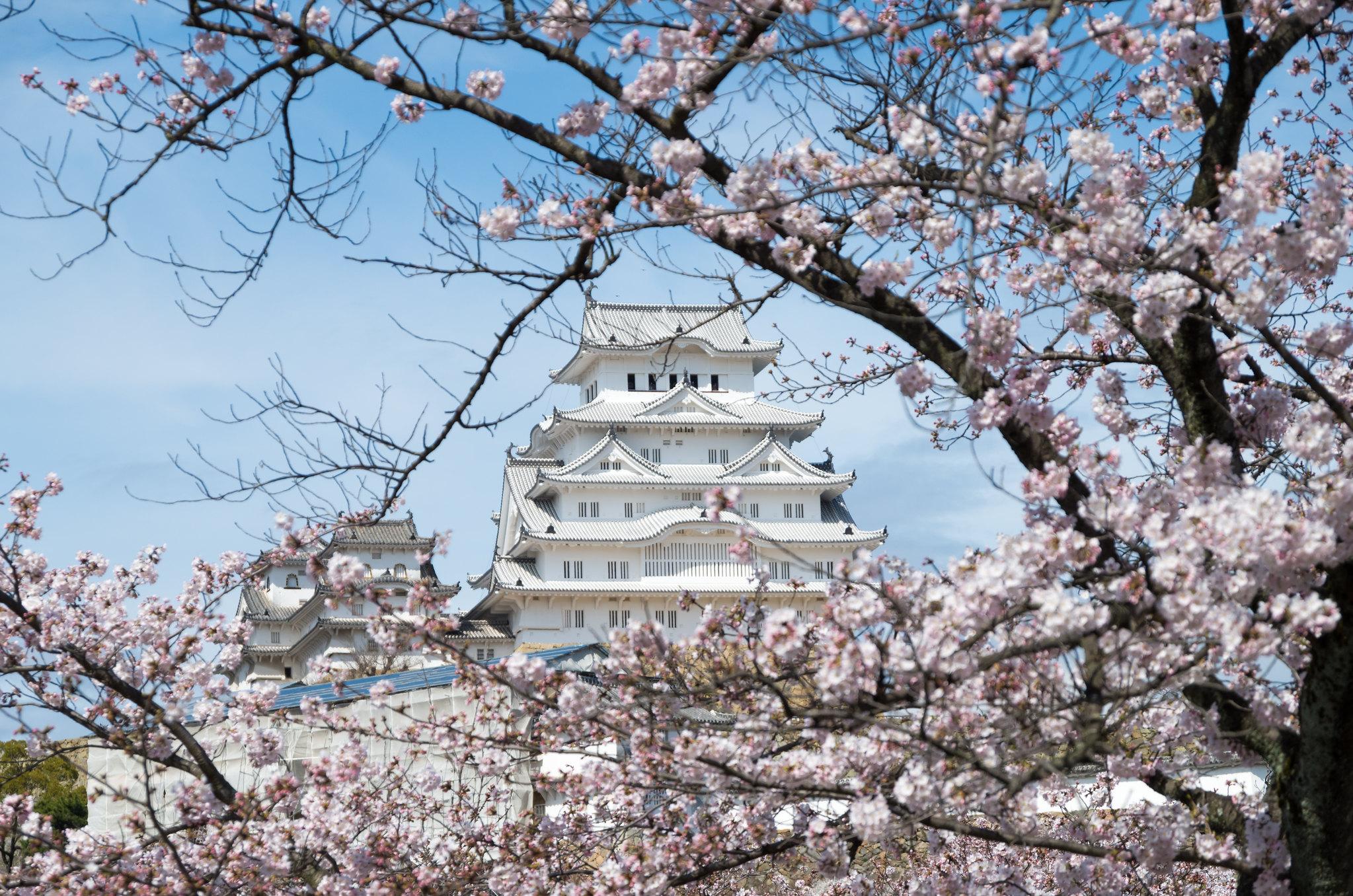 木の間からの姫路城