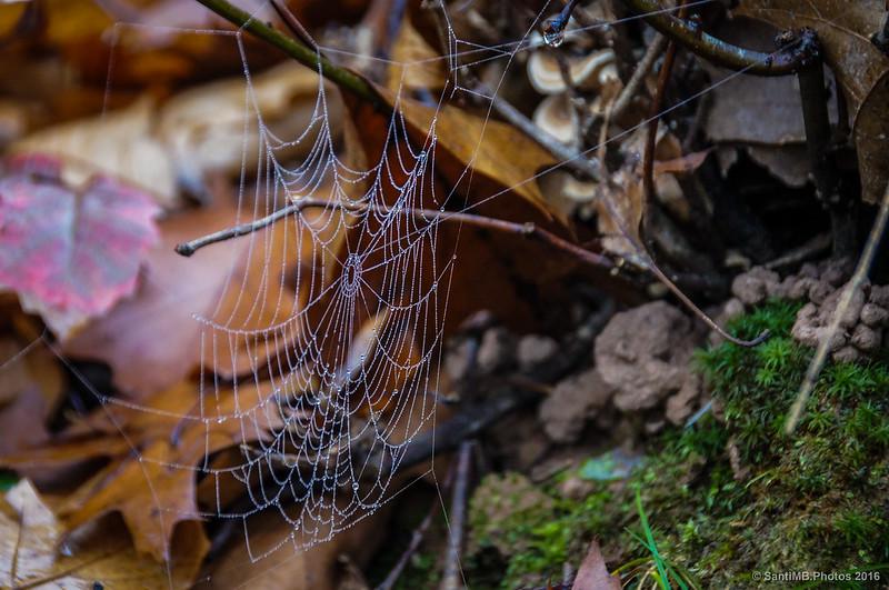 La tela de araña
