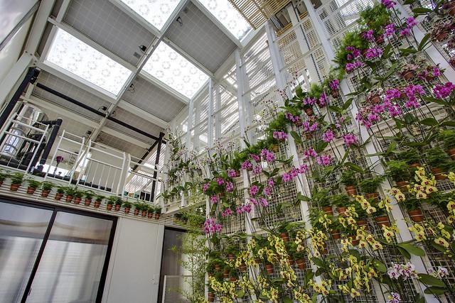 交大建築所2014年參加太陽能建築十項全能綠色競賽作品「蘭花屋」。圖片來源:Solar Decathlon Europe 2014