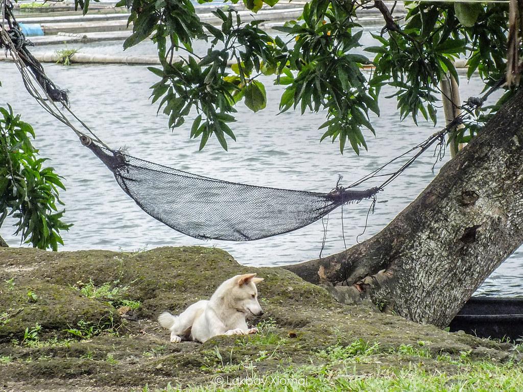 Lakbay Xiomai | San Pablo, Laguna - Seven Lakes, Bunot Lake - Peaceful and dog