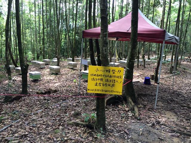 安置在林業試驗所蓮華池研究中心林地的蜂箱。圖片來源:林試所