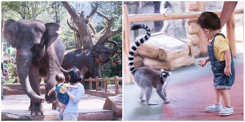 3-elephant-animals-via-forrestwilmar