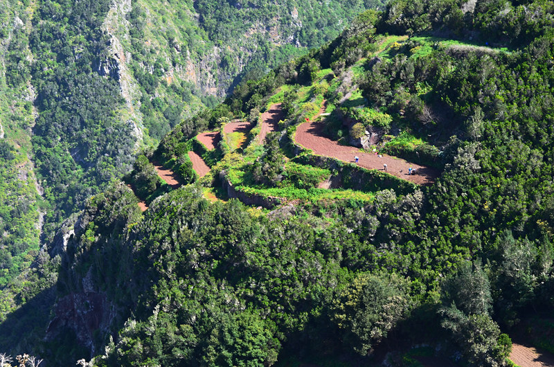 Farm terraces, Anaga, Tenerife, Canary Islands