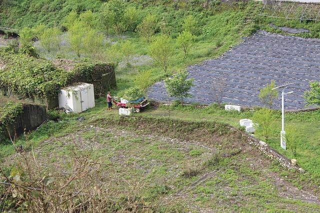 西寶農地一景。攝影:廖靜蕙