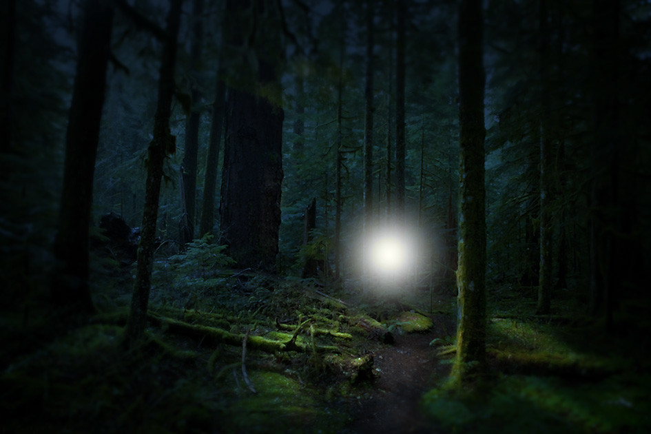 point of light in a dark forest