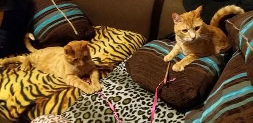 Jerry, gatito rubio guapo muy dulce y bueno, esterilizado, nacido en Abril´15 en adopción. Valencia. ADOPTADO. 26724657505_a5a17d1645