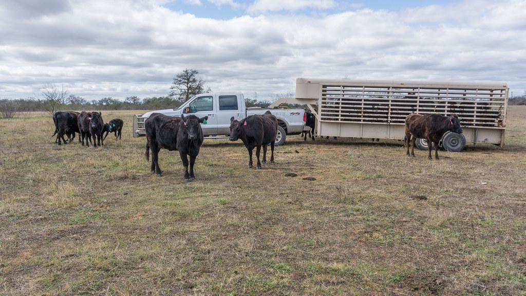 Herd* Herd, The - Paradise & Underworld