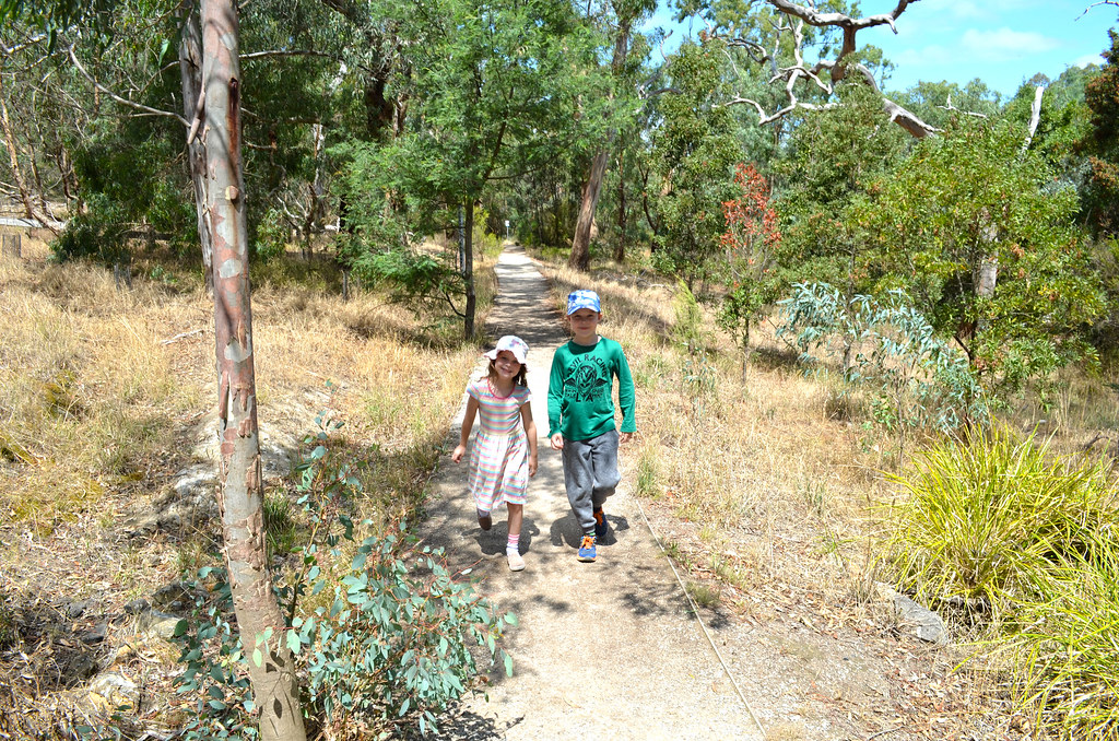 Flying Fox Wetland Walk - Yarra Bend Park - Kew - Melbourne