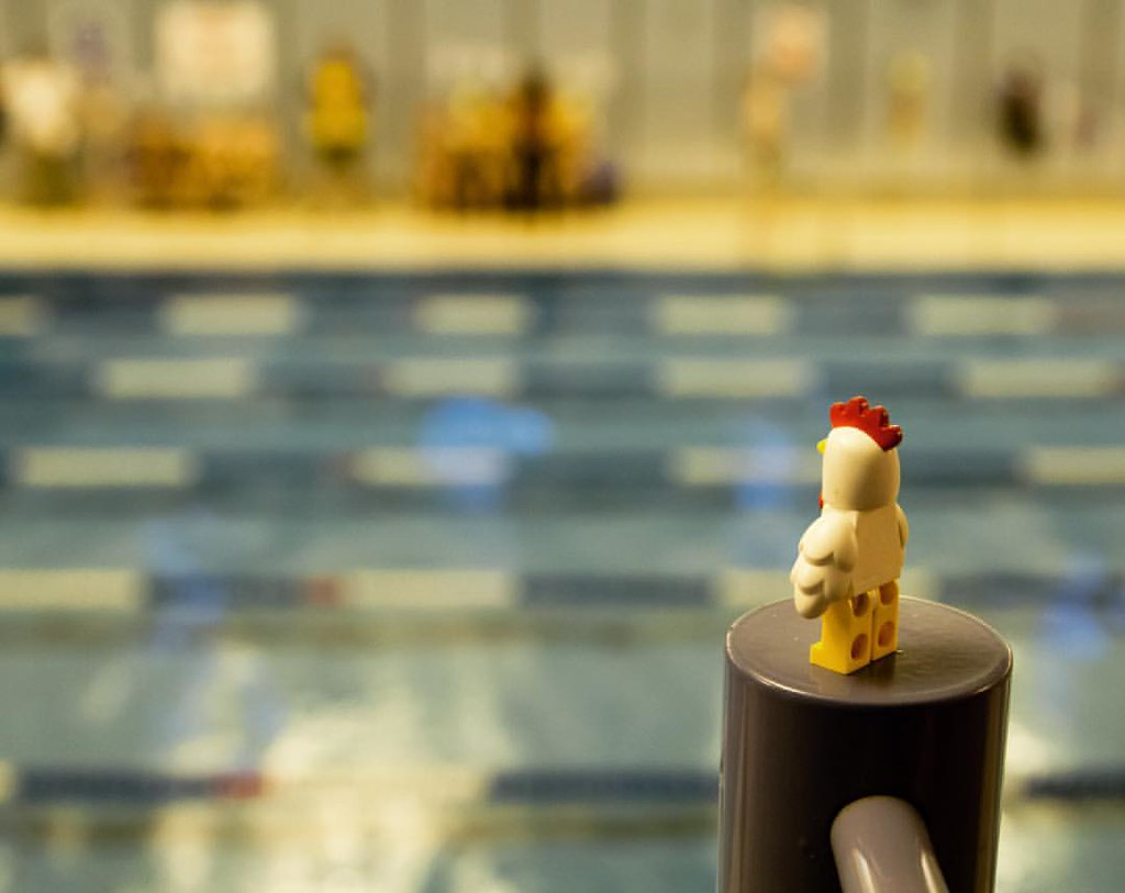 Chuck goes to the gala lego chicken swimming pool for Chicken in swimming pool