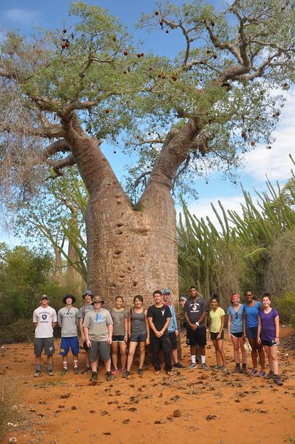 Baobab!