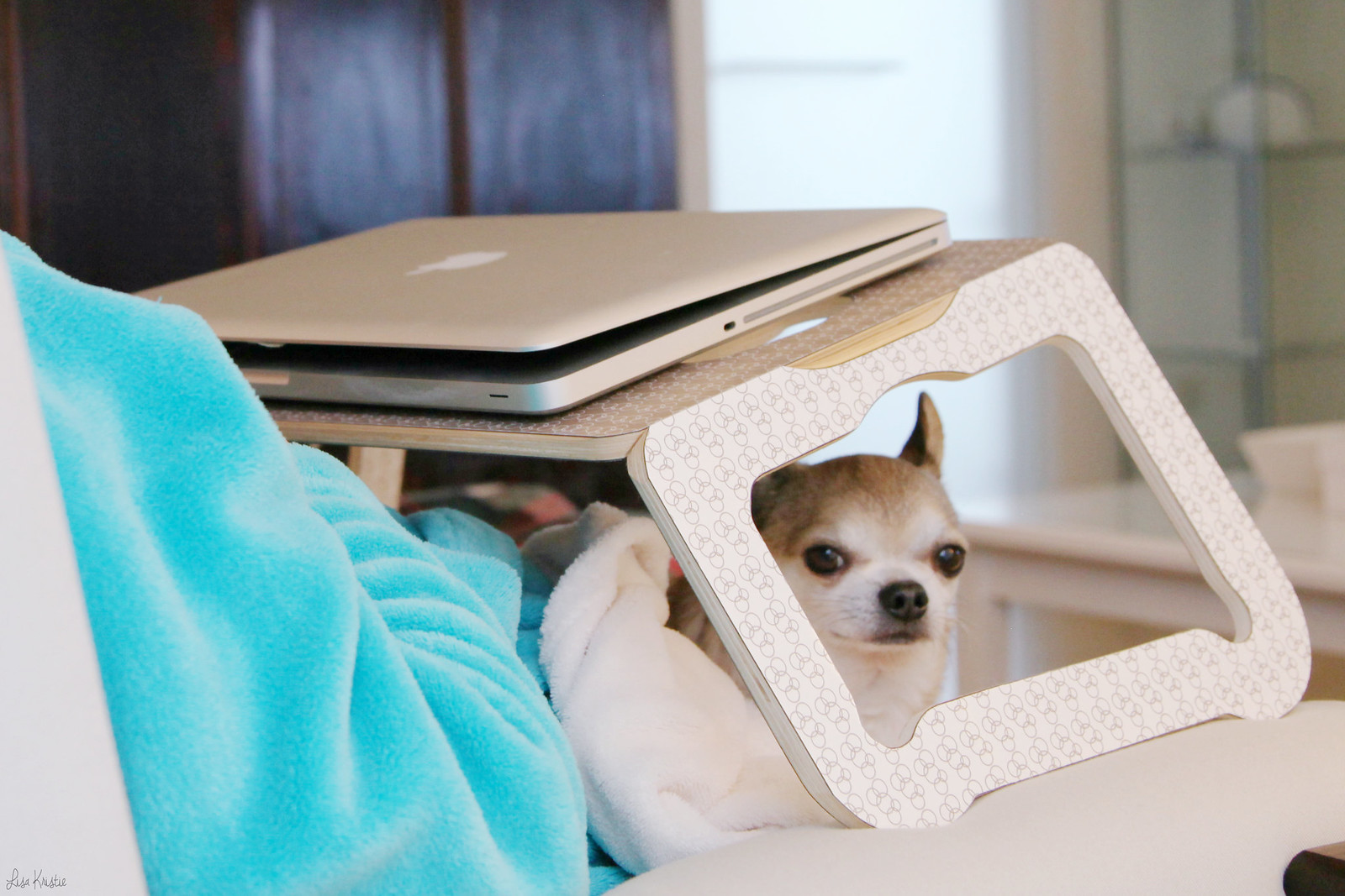 wolfthedog chihuahua little tiny dog puppy fits under ikea laptop tray stand support lap cute adorable small wolf