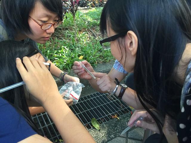 學生到野外以滴管吸孑孓,觀察蚊子的變化。圖片來源:蔡坤憲研究室。