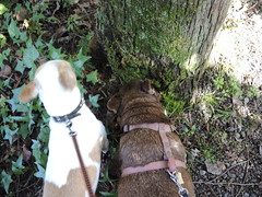 Tree sniffing