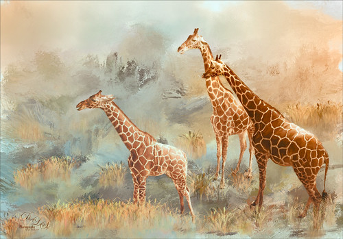 Image of giraffes on painted background