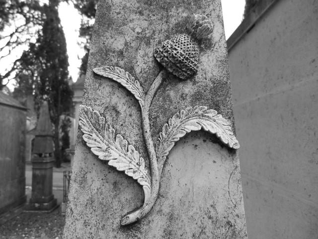 Flor de cardo en el Cementerio de los Placeres. Símbolo de la Eterna Saudade