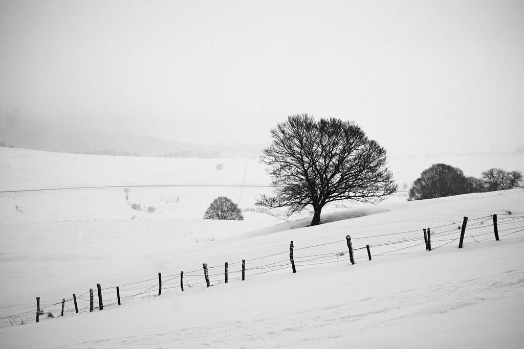 En suivant les traces de l'hiver. 25498507876_5d8ce97945_b