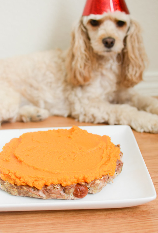 Birthday Cake for Dogs - homemade chicken cake for your pup's birthday! With sweet potato frosting!