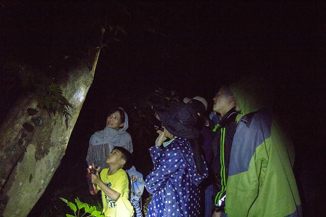 夜間觀察處處充滿驚喜,學員們都認真的搜索樹林中的昆蟲們