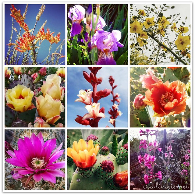 Spring Desert Blooms - Photos by Regina Lord