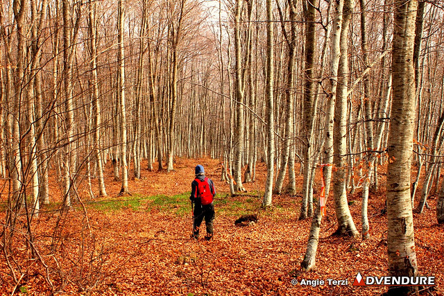 Impressive beech forest as we descend from the ridge!
