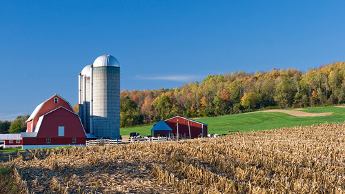 Dairy farm with red barn in autumn