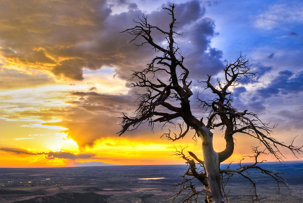 Drought combined with global warming is a major threat to our trees in Northern New Mexico—and around the world—says LANL ecologist Nate McDowell.