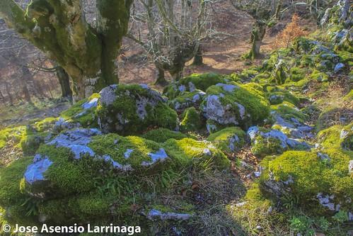 Parque natural de Gorbeia #DePaseoConLarri #Flickr -2768