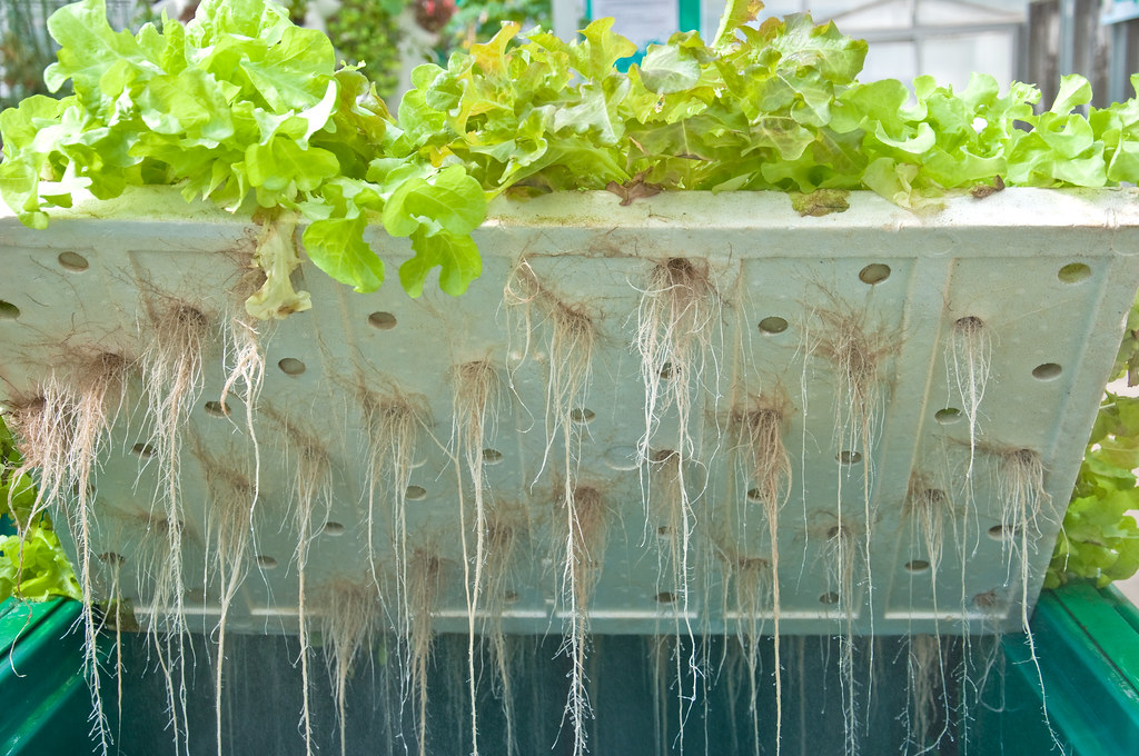 Plants are adapted to work with soil microorganisms (namely bacteria and fungi) to feed and protect themselves. Can plants grown without soil be as healthy and nutritious and plants grown in biologically rich soil?