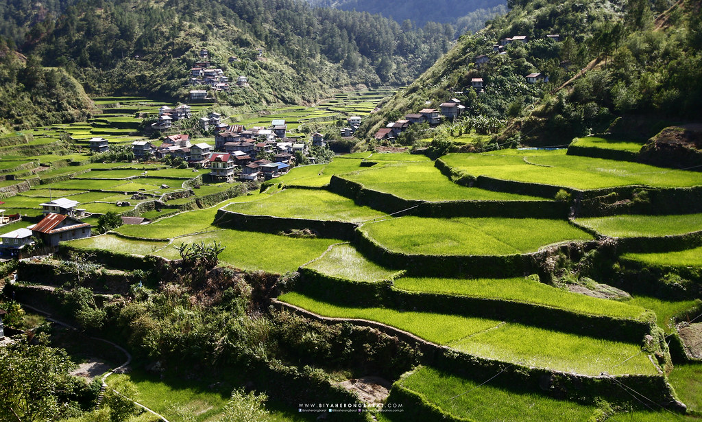 Barlig Mountain Province rice terraces