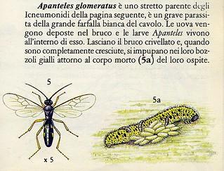 foto 9 larve parassite