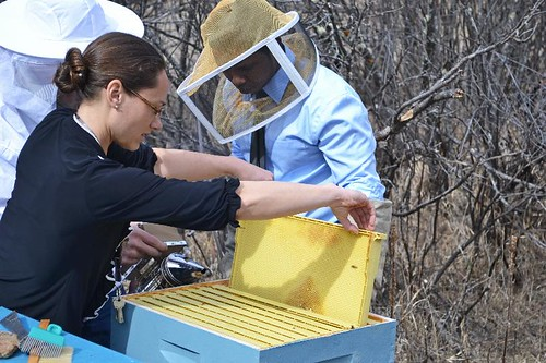 (L-R) Boxelder Science Teacher Michelle Crane assisting student Ibrahim Khatib with the Center's bees