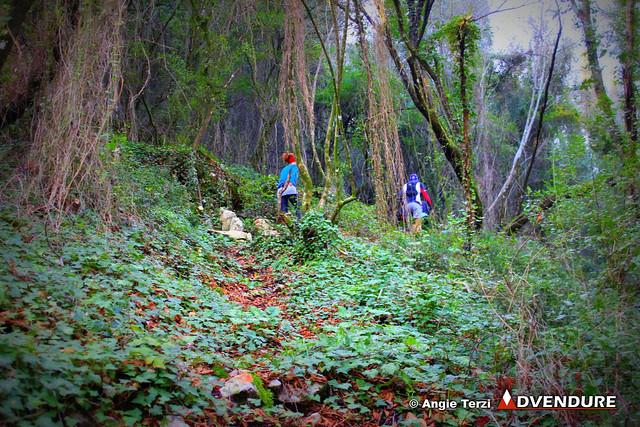 """Γρήγορα μετά τα πρώτα """"αναγνωριστικά"""" χιλιόμετρα η φύση αλλάζει και το δάσος γίνεται πυκνό και εντυπωσιακό!"""
