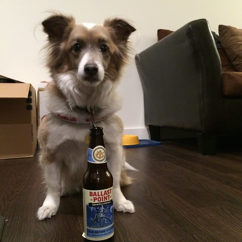 A dog sitting over an open & empty bottle of Ballast Point