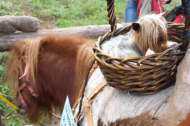 Dog in a basket, San Abad, Buenavista del Norte, Tenerife