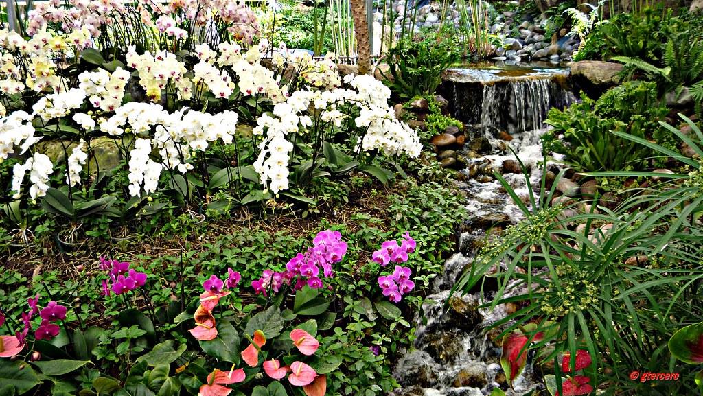 Orqu deas anturios cascada y otras en invernadero de jardi for Jardines de anturios