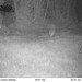 Fox / Hedgehog