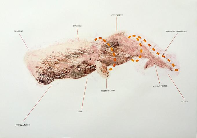Moby Dick, Whales, Transfers, Esteban Ruiz