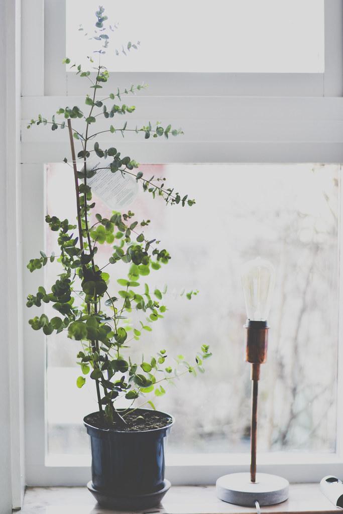 eucalyptus_inredning